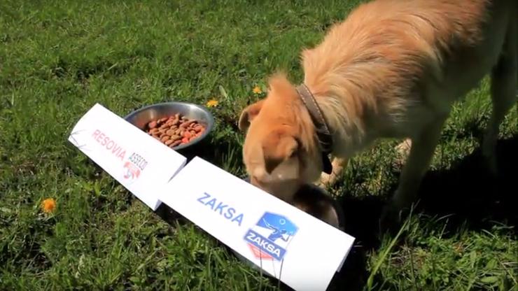 Bolek już wie! Pies wytypował siatkarskiego mistrza Polski (WIDEO)